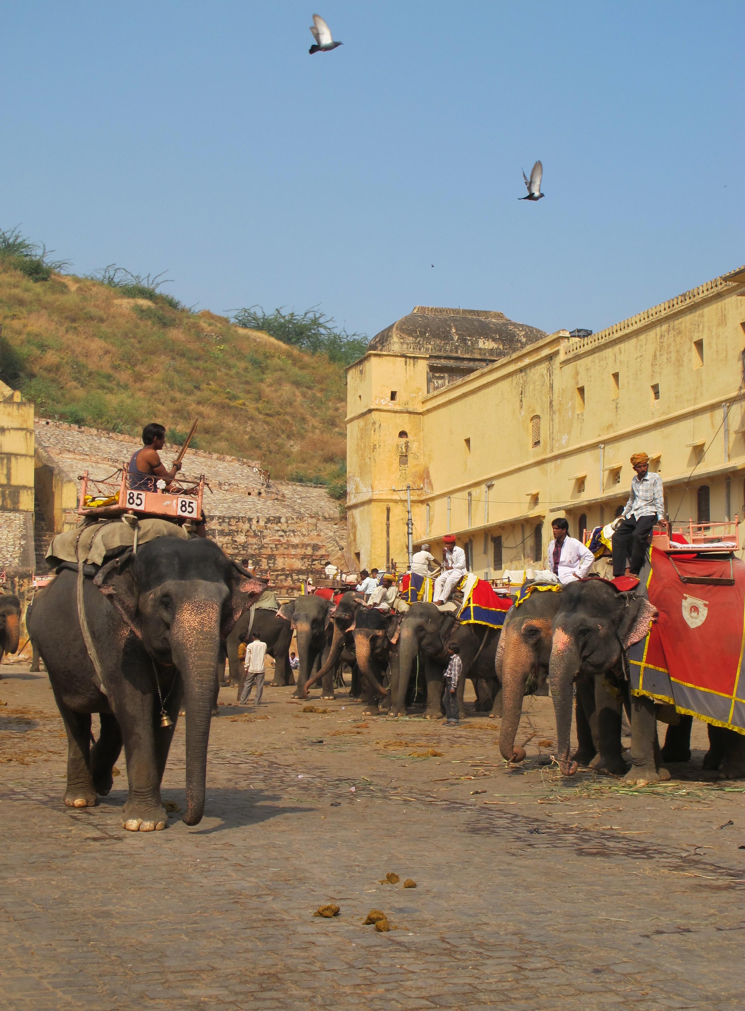 Elephants - City Palace - Jaipur - India