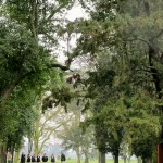 Argentina | Eight Days, Four Hotels | La Bamba de Areco Estancia