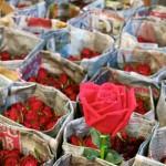 STYLE MOMENT | Bangkok | Pat Khlong flower market