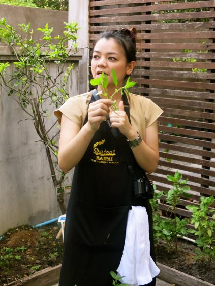 thai basil_baipai cooking school_bangkok_thailand