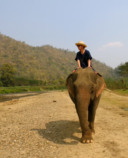 riding elephant_chiang mai_thailand