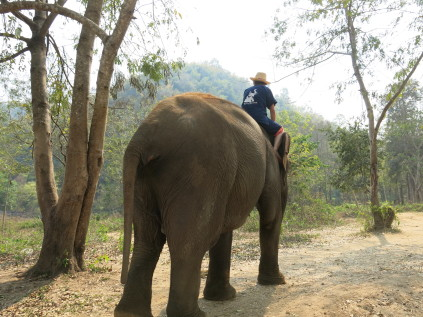 elephant_chaing mai_thailand