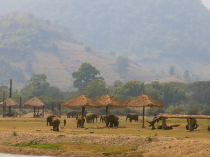 elephant reservation_chiang mai_thailand