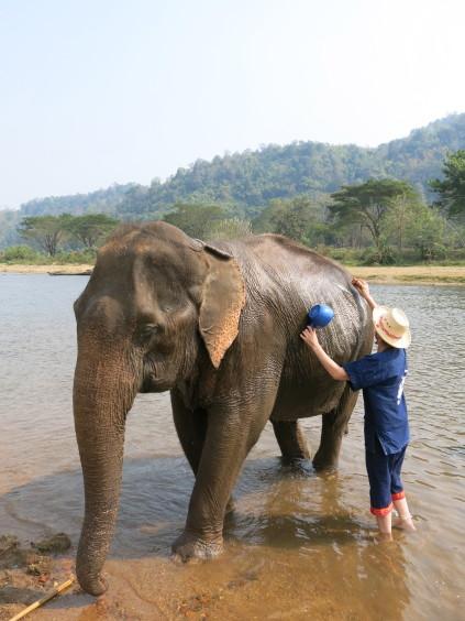 bathing elephant_chiang mai_thailand
