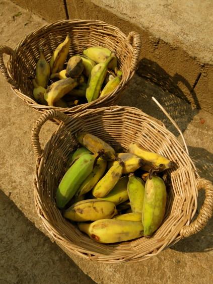 bananas_chiang mai_thailand