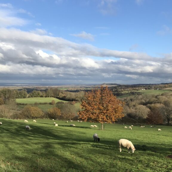 Photo Album: A Cotswolds Day